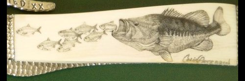 Colin Paterson - Completed Largemouth Bass Scrimshaw - Image 11