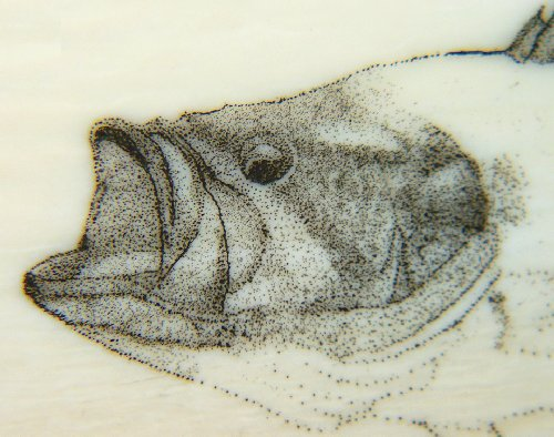 Colin's Largemouth Bass Scrimshaw - Image 6
